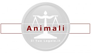 avvocato per gli animali