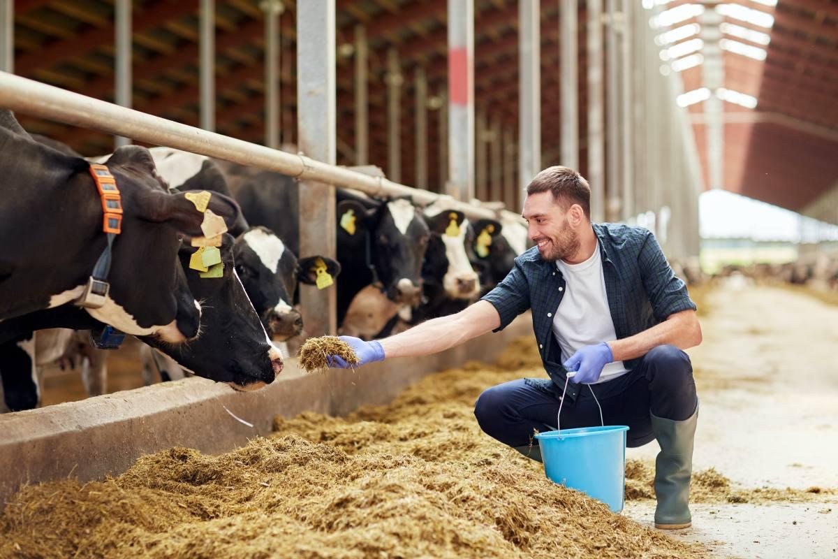 benessere animale allevamento